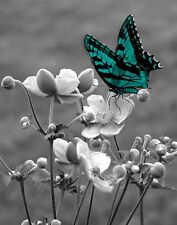 Teal Wall Art/Butterfly/Flower/Floral Wall Art Matted Picture