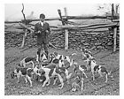 1910s era vintage photo-Man with pack of beagles-ready for the hunt-8x10 in