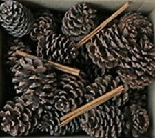 Cinnamon Pine Cones Fragrance Oil Candle Making Supplies FREE SHIPPING