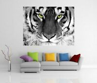 WHITE TIGER ART GIANT WALL ART PICTURE PRINT POSTER G136