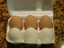 6 MIXED (3 BROWN AND 3 WHITE) CERAMIC NEST TRAINING EGGS FOR CHICKEN HATCHING