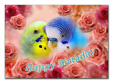 c065; Large Personalised Birthday card; Custom made for any name; Budgies parrot