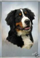 Bernese Mountain Dog A6 Blank Card By Starprint