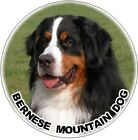 2 Bernese Mountain Dog Car Stickers - Starprint - Auto combined postage