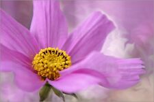 Poster / Leinwandbild cosmea Summerdance - Emotion-Art