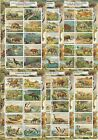 PREHISTORIC LIFE DINOSAURS FAUNA 6 S/SHEETS MNH IMPERFORATED