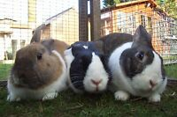 Annual 1 year sponsor Pandora, Phoebe & Humber Rescue Rabbits Animals CHARITY