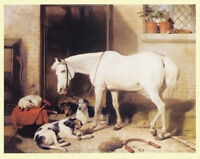 FOXHOUND HUNTER HORSE HACK KENNELS DOG FINE ART PRINT S