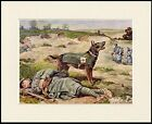 GERMAN SHEPHERD RESCUE WAR DOG LOVELY LITTLE DOG PRINT