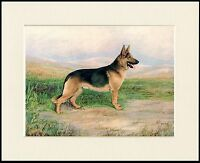 GERMAN SHEPHERD GREAT LITTLE DOG PRINT MOUNTED READY TO FRAME