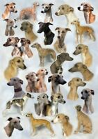 Whippet A6 Dog Notelets/Blank Cards No 13 By Starprint