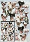 Chinese Crested Dog Gift Wrapping Paper By Starprint