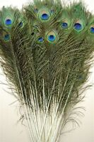 """25 Pcs PEACOCK TAILS Natural Feathers 40-45"""" Craft/Art/Bridal/Costume/Halloween"""