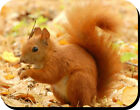 RED SQUIRREL MOUSEMAT FREE PERSONALISATION