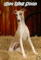 Whippet Get Well Soon Card By Starprint - No 1