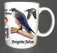 PEREGRINE FALCON BIRD MUG LIMITED EDITION XMAS GIFT