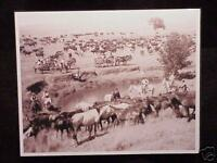 Horses Cowboys Watering Hole  West Ranch Vintage Photo