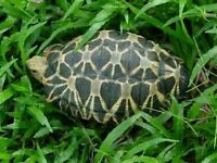 Tortoise outside enclosure seed, clover grass 50g