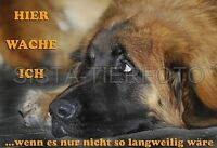 METALL-WARNSCHILD A4: LEONBERGER 071