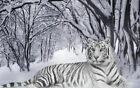 """Tiger white in snow forest Beautiful CANVAS ART PRINT 16""""X 12"""" poster cat"""
