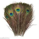 """50pcs Wholesale Natural Real Peacock Tail Feathers For Wedding Decor 10""""-12"""" m12"""