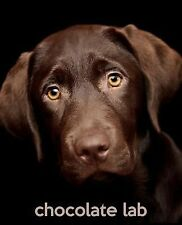 Chocolate Lab : A Gift Journal for People Who Love Dogs: Chocolate Labrador...