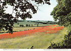 Poppies Walkern Road Stevenage Flowers Hertfordshire Womens Institute Postcard