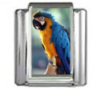 PARROT BLUE MACAW Photo Italian Charm 9mm Link - 1 x BI003 Single Bracelet Link