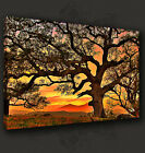 ABSTRACT TREE SUNSET CANVAS PRINT POSTER MODERN DESIGN MANY SIZES TO CHOOSE FROM