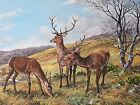 Frances Fry Original Oil Painting - Stags On Room Hill Exmoor Landscape