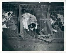 1942 Kips Bay Boys' Club Pet Exhibit Boys With Their Dogs NYC Press Photo