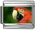 PARROT BIRD Photo Italian Charm 9mm Link - 1 x BI218 Single Bracelet Link