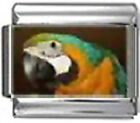 PARROT BIRD Photo Italian Charm 9mm Link - 1 x BI224 Single Bracelet Link