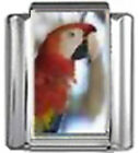 PARROT BIRD Photo Italian Charm 9mm Link - 1 x BI214 Single Bracelet Link