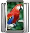 PARROT BIRD Photo Italian Charm 9mm Link - 1 x BI220 Single Bracelet Link