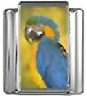 PARROT BIRD Photo Italian Charm 9mm Link - 1 x BI221 Single Bracelet Link