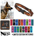 Lupine Dog Puppy Collar 1 wide for med to XL dogs Lifetime Guarantee