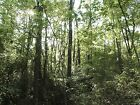 FULLY WOODED ACRE of Land  500ft to Coro Lake  SW TN