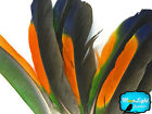 1 Pair Multi Color Amazon Parrot Wing Feathers rare