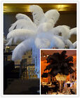 Wholesale 10 500pcs White Black Natural ostrich feathers 14 16inches 35 40cm new