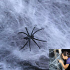 Dazzling Toys 12 Pack Realistic Halloween Spider Webs  Webbing + Spiders