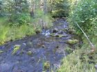 Montana Mining Placer Creek Claim Rock collecting Precious Sapphire Gemstones