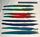 PARROT TAIL FEATHERS HYBRID HYACINTH BLUE GOLD SCARLET MACAW AND MORE FEATHERS