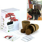 Bonsai Tree Starter Kit Plant Seeds Pots Peat 3 Distinctive Trees To Grow Indoor