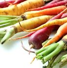 Rainbow Mix Carrot Seeds Choices to 1 LB Easy Grow Mix colors Free Ship USA 258