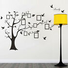 Family Tree Bird Wall Sticker Photo Picture Frame Removable Decal Art DecorSS