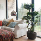 Artificial 180cm 6ft Fruticosa Tree Realistic Japanese Bonsai Style Office Plant