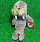 MWMT Ty Beanie Jolly The Walrus 1996 PVC Plush Toy NEW RETIRED - Free Shipping