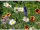 All Perennial Wildflower Mix Seeds Packet to 20LB FREE SHIP Easy Grow Flowers 6