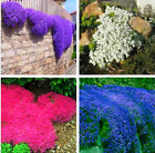 100pcs/bag Creeping Thyme Seeds or Blue ROCK CRESS Seeds - Ground cover